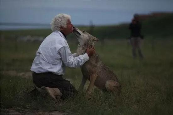 文/姜戎   狼是小说《狼图腾》的绝对主角,所以,我和导演阿诺达成共识:《狼图腾》电影的主角也必须是狼,必须是纯种蒙古草原灰狼,而绝不能用狗或山寨狼替代。在草原,狼是神,狗是奴;狼是图腾,狗是家畜。狼与狗的目光眼神、气质气度、精气神韵截然相反,狗眼里永远射不出草原野性的光芒。如果以狗代替狼,电影必败无疑。阿诺听后与我击掌,完全赞同我的意见。   然而,电影《狼图腾》主角的身份确定之后,所面临的特殊问题是:狼在哪里?狼能否成为电影中的演员?全世界的电影大导都知道,狼是天下最不能被人驯服的,又是最危险的猛兽