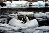图文:图片欣赏-南极冰岛