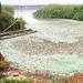 江苏无锡自来水遭污染