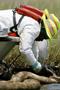 事故评估:墨西哥湾共漏油490万桶