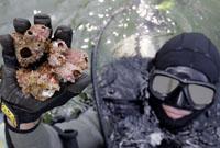 潜水员展示已经受到污染的海底生物