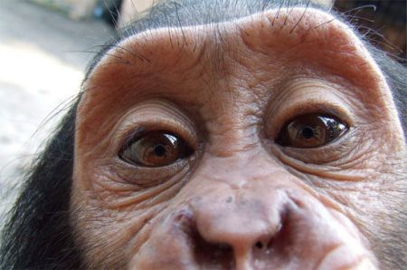 人和黑猩猩能生孩子