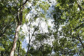 巴西林哈里斯 淡水河谷自然保护