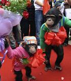 黑猩猩婚礼