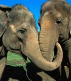 大象彬彬和Women