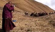 第16期:僧侣用DV关注生命