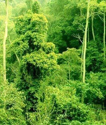西双版纳热带雨林 (云南)