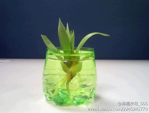 一个废旧瓶,一盆绿植,一份乐趣