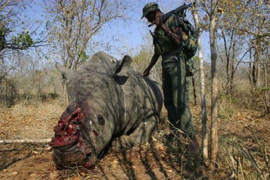 非洲犀牛风景图片