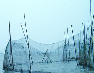 非法猎捕致湖南东洞庭湖候鸟急剧减少