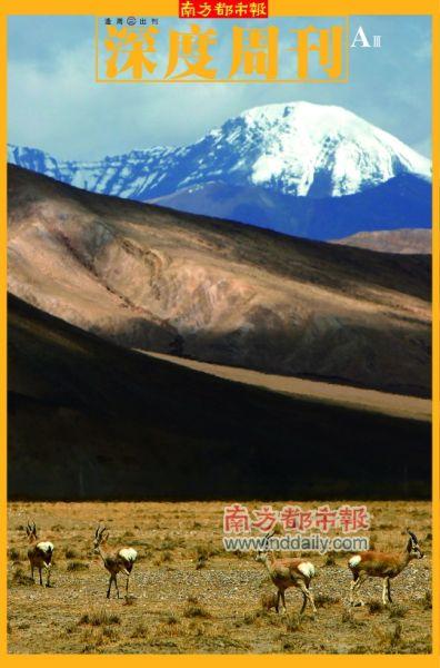 珠峰保护区内,喜马拉雅山脉北麓希夏帮马峰附近的一个雪山下,几只藏原羚在觅食。