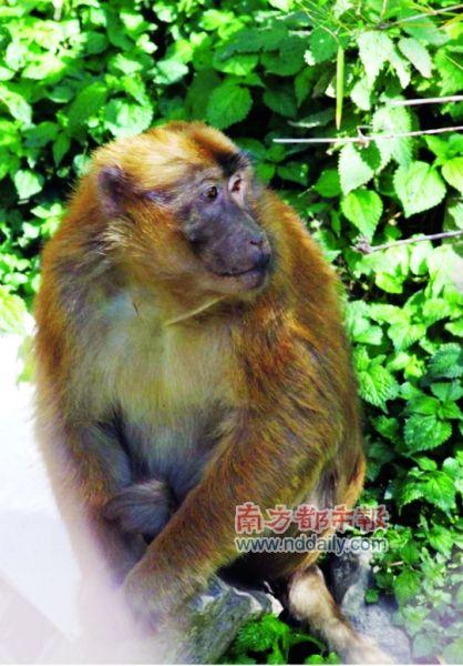 猕猴 科考队供图