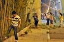 武汉绿化林遭偷采上千棵竹子连根拔起