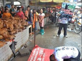 广西玉林狗肉节期间1万条狗被屠杀引热议(组图)