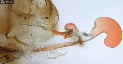 肉棒欲撸_惊人的是,雌虫拥有粗长的肉棒,而雄虫长着娇美的({}).