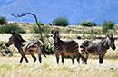 西非动物王国探秘
