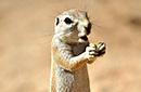 纳米比亚动物王国