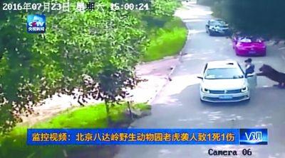 北京八达岭野生动物园老虎咬人事件责任应如何划分?