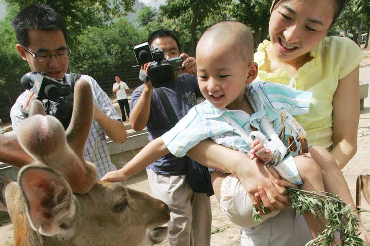 图文:3岁的郎铮在动物园见到梅花鹿