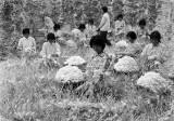 图文:上世纪七十年代桐乡的集体养蚕