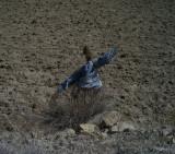 图文:稻草人留在农民耕地中