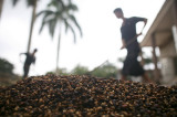 图文:工人在晾晒洗好的咖啡豆