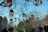 图文:西安环城公园里热闹非凡 近百只小鸟歌唱