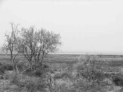 新疆第一大盐水湖成沙尘暴主要策源地(图)