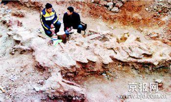 汝阳发现较完整恐龙化石
