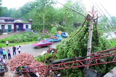 大树被风刮断,苍山县大仲村镇车庄村里一片狼藉.