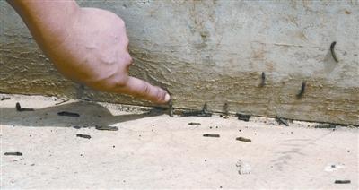 图:异常的黑虫子涂亚琼