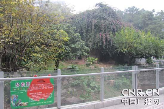 广州动物园举办华南虎保护认养活动