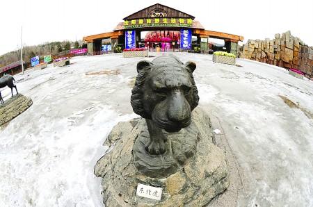 从去年底至今年2月,沈阳森林野生动物园内的11只东北虎陆续死亡.