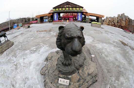沈阳野生动物园11只东北虎营养不良死亡(组图)