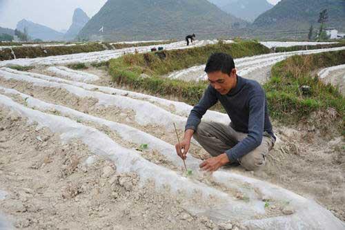 广西12个市出现旱情176万人饮水困难(组图)