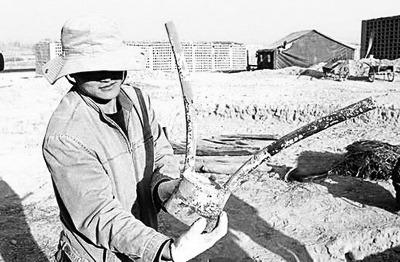 新疆两千年墓葬现世界最早假肢小麦新鲜完好