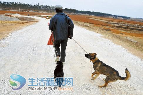 旱情追踪:节水节粮 卖牛卖狗