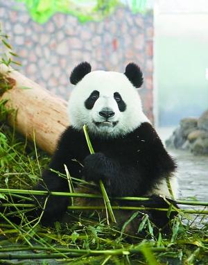 熊猫水泵结构图