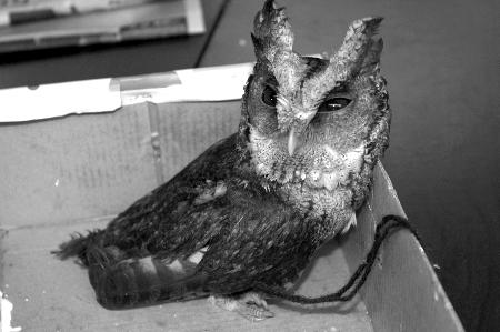 菜市场有人卖猫头鹰市民买下交给警察