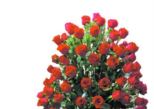 他会第一次送她玫瑰花