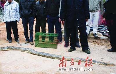 四川最近挖出蛇新闻_