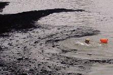 """网友""""湘潭矛戈""""在网络上发出这条微博:湘潭一大桥前的十四总码头下,货船冲洗留下黑色污染物,带油性面积巨大,绵延数公里,已漂过湘潭三大桥。图/网友湘潭矛戈"""