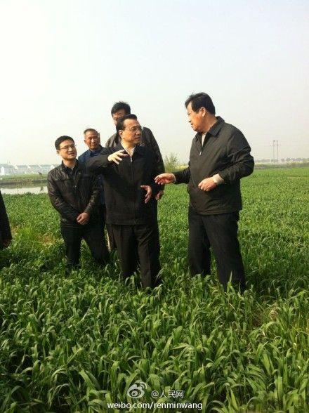 李克强来到常熟古里镇田娘农场,走进麦地,站在田埂上向农民了解家庭农场情况