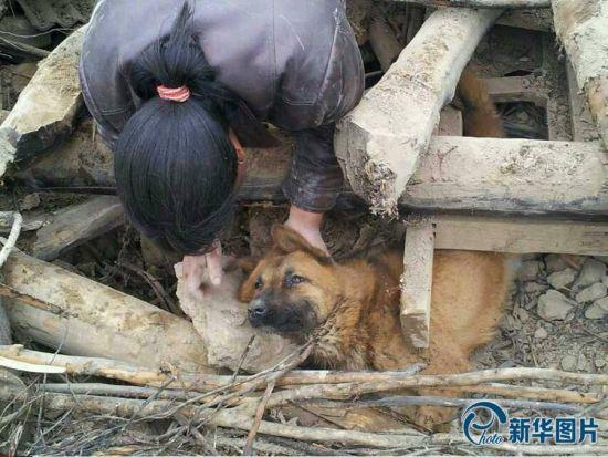 一名妇女正在安慰被困在废墟下的大黄狗。(图片来源:CFP)
