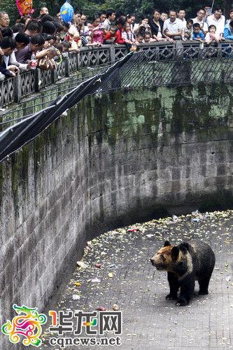 国庆第二天5万人涌入重庆动物园 别用投食表达爱