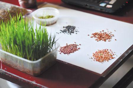 浏阳种出七色彩稻
