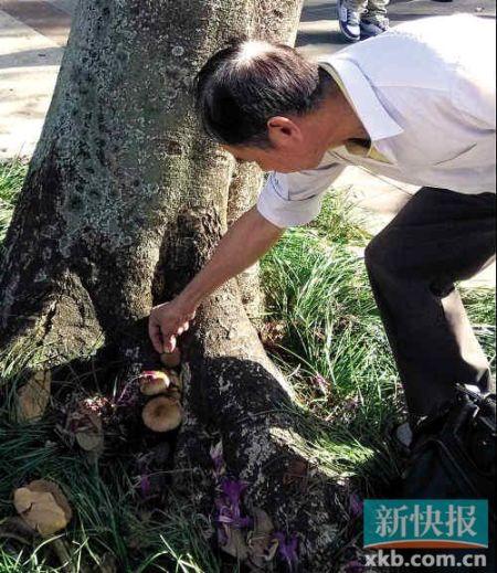公园内发现灵芝?野蘑菇!