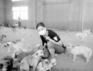 志愿者照顾小狗。