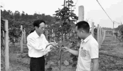 朱有志(左)负责开慧村支部榜首书记后,时常到田间地头访问研究。图为朱有志和村支部布告彭文到猕猴桃莳植基地检察农作物成长状况。