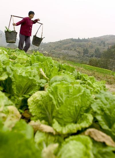 贵州省黔东南苗族侗族自治州镇远县积极发展农村沼气,截至